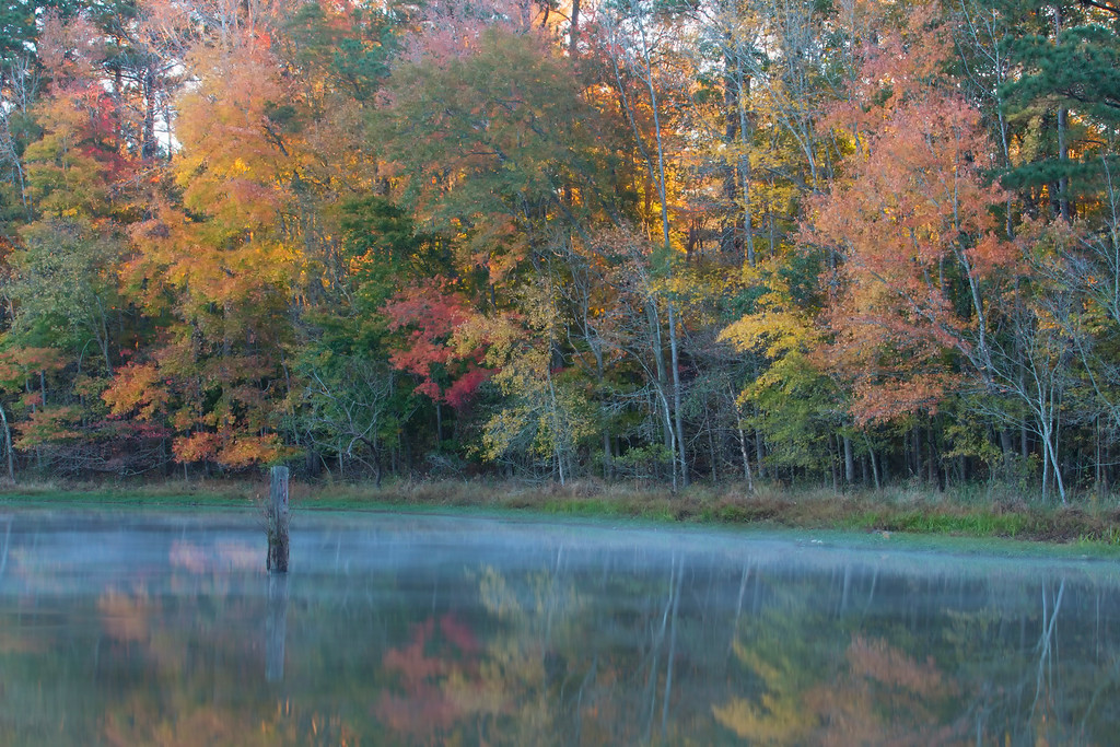 Lake Benson Fall Color